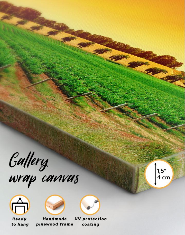 Panoramic Grape Fields Canvas Wall Art - Image 1