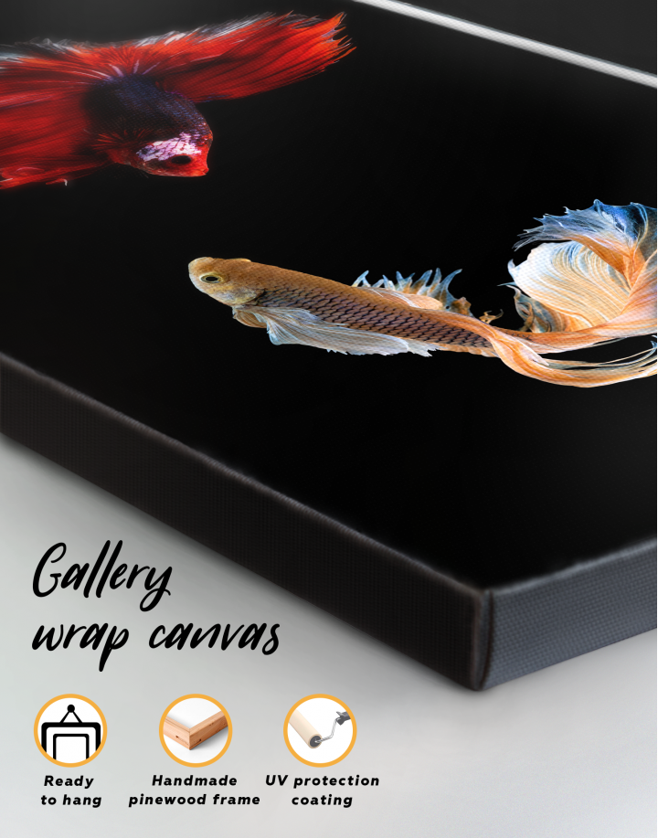 Siamese Fighting Fishes Betta Canvas Wall Art - Image 3