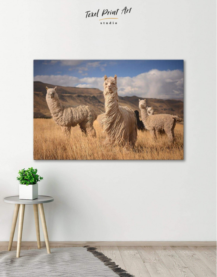 Wild Llamas Canvas Wall Art - Image 1