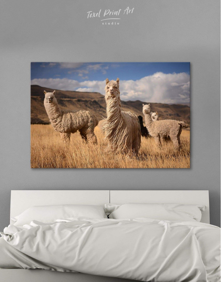 Wild Llamas Canvas Wall Art - Image 0