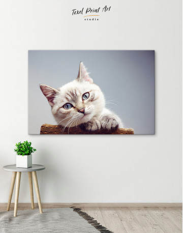 Cute Kitten Canvas Wall Art - image 2