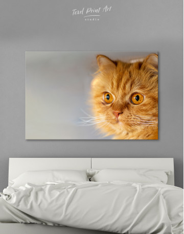 Red Persian Cat Canvas Wall Art