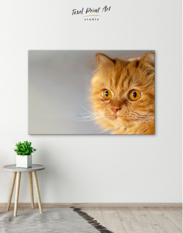 Red Persian Cat Canvas Wall Art - image 4