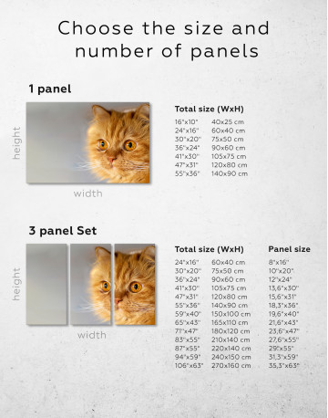 Red Persian Cat Canvas Wall Art - image 9