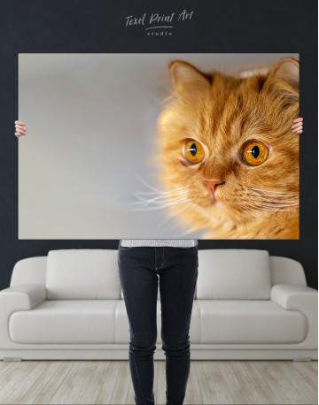 Red Persian Cat Canvas Wall Art - image 7