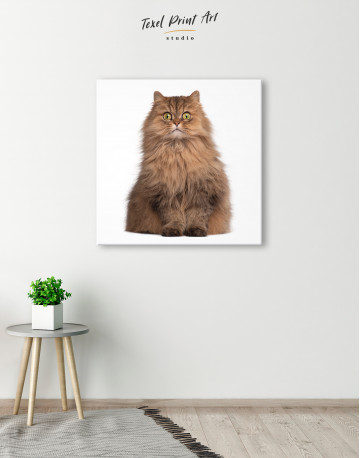 Surprised Persian Cat Canvas Wall Art - image 5