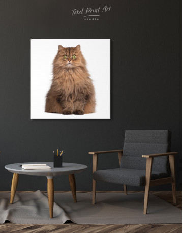 Surprised Persian Cat Canvas Wall Art - image 1