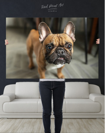 French Bulldog Photography Canvas Wall Art - image 9