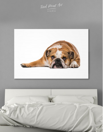French Bulldog Lying on the Floor Canvas Wall Art