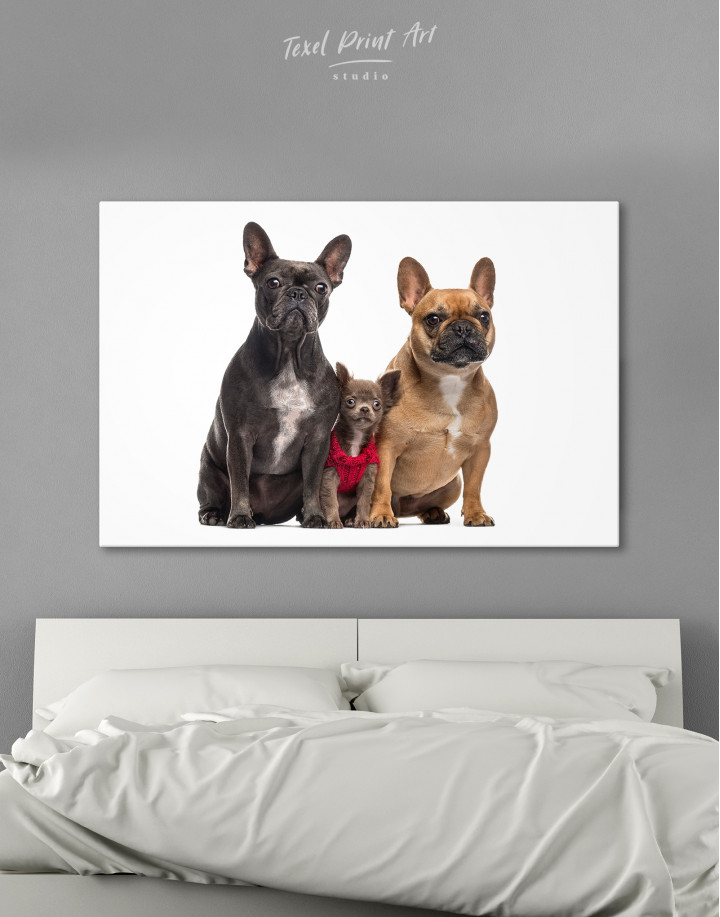 Puppy Chihuahua and French Bulldogs Canvas Wall Art
