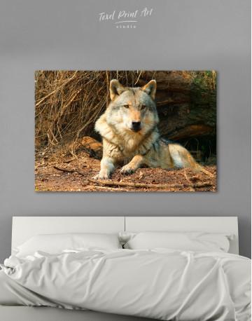 Wild Gray Wolf Canvas Wall Art