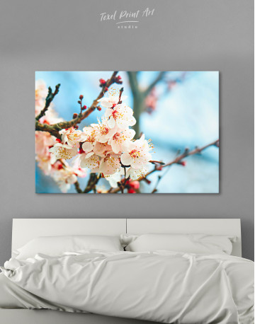 Apricot Blossom in Spring Canvas Wall Art
