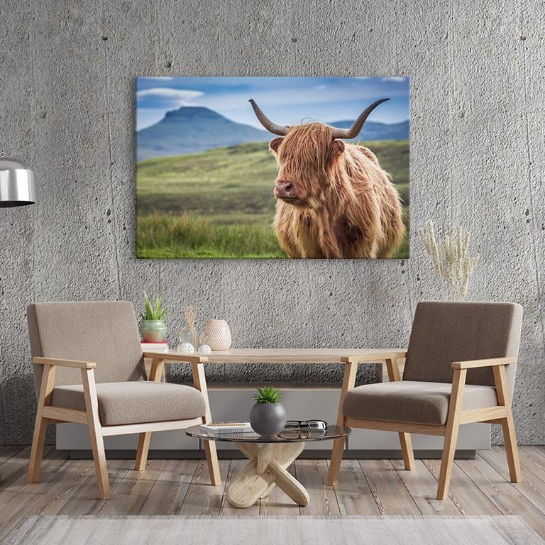 Shaggy Cows Canvas Prints